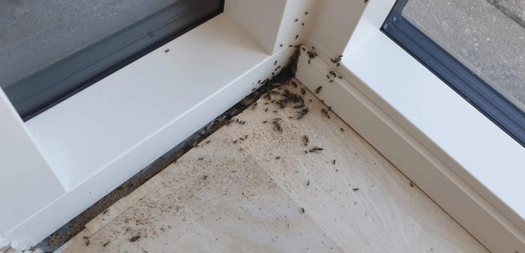 Myrer indendørs